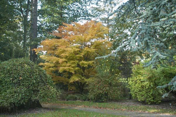 The Arboretum at Coolcarrigan