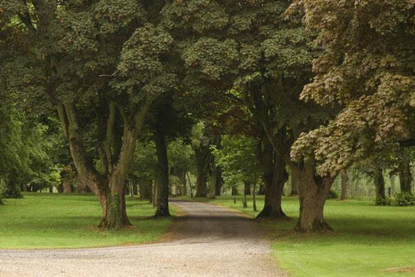 Gardens at Coolcarrigan