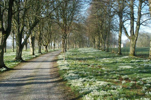 Spring at Coolcarrigan